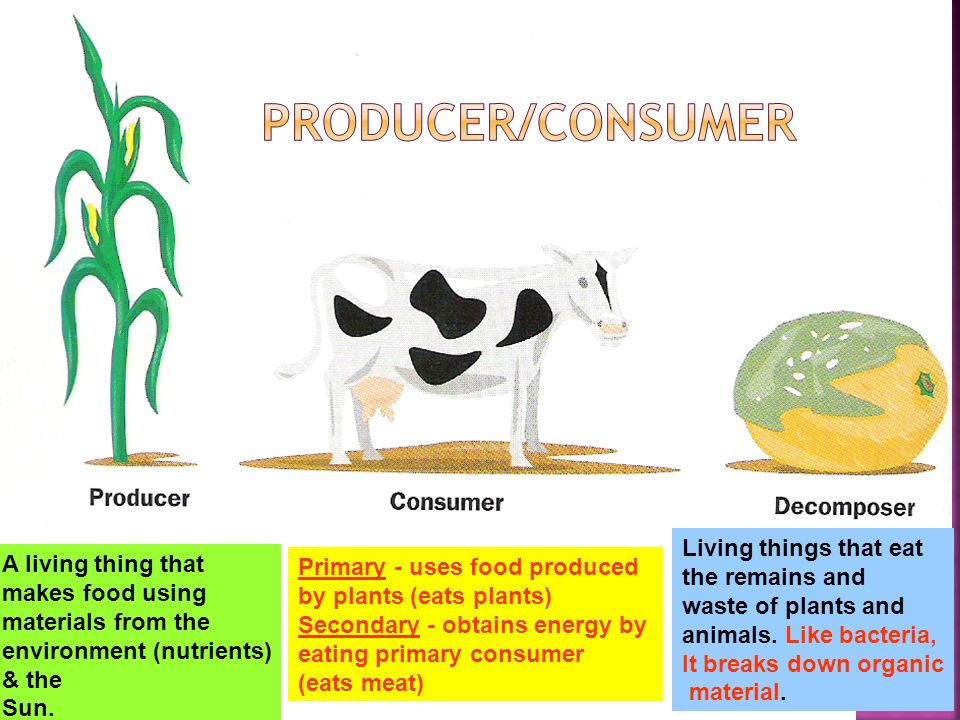 Producer/Consumer Living things that eat A living thing that