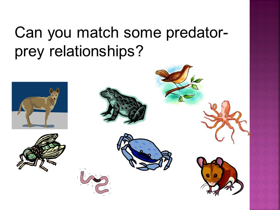 Can you match some predator-prey relationships