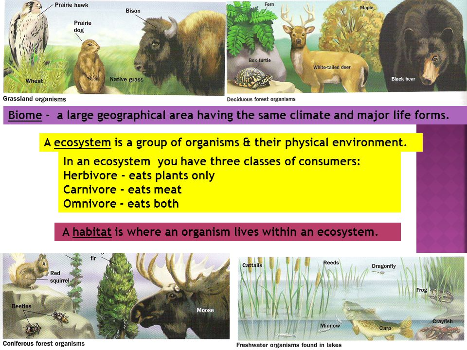 Biome - a large geographical area having the same climate and major life forms.