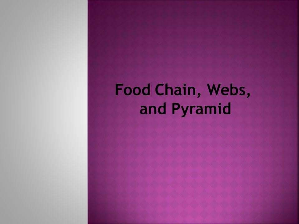 Food Chain, Webs, and Pyramid