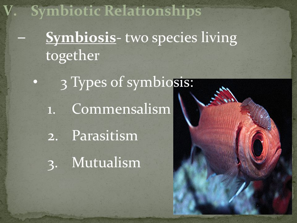 Symbiotic Relationships Symbiosis- two species living together