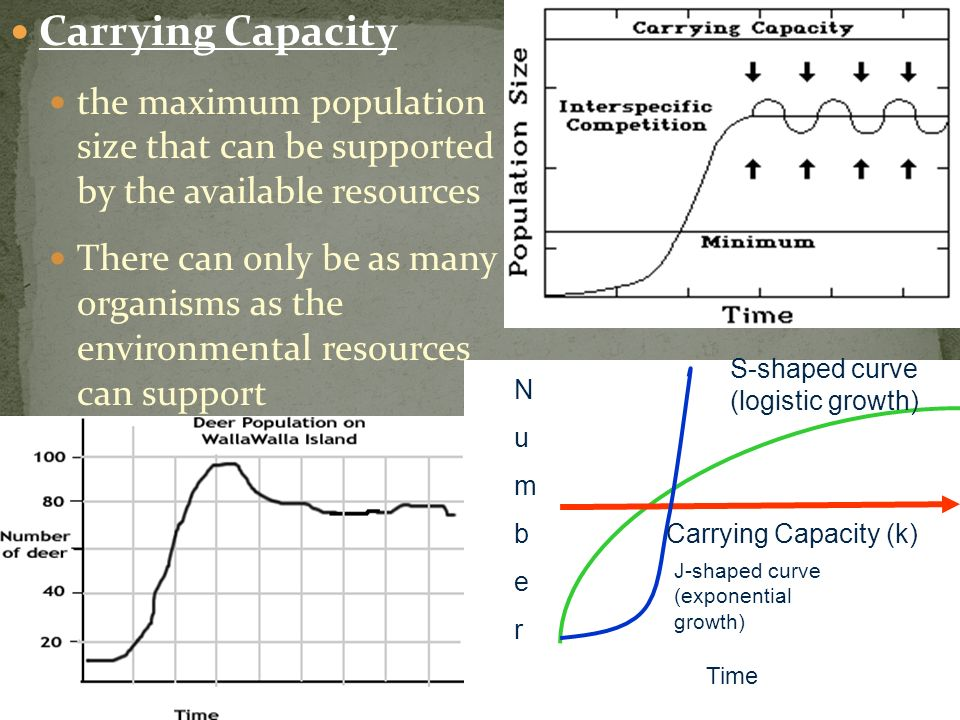 Carrying Capacity the maximum population size that can be supported by the available resources.