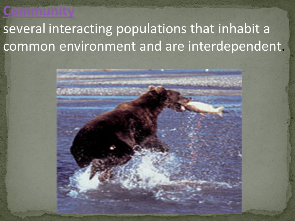 Community several interacting populations that inhabit a common environment and are interdependent.