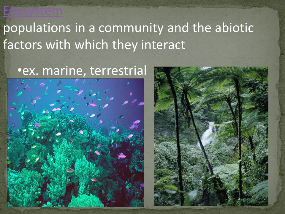 Ecosystem populations in a community and the abiotic factors with which they interact.