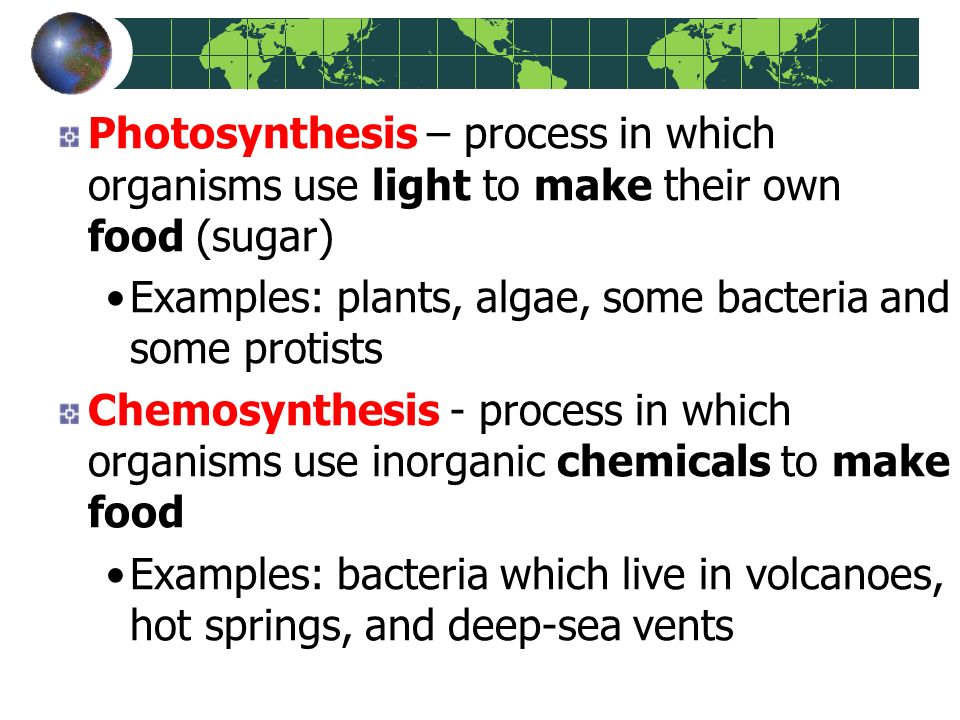 chemosynthesis is the process by which the organisms manufacture Chemoautotrophs, organisms that obtain carbon through chemosynthesis process giant tube worms use bacteria in their trophosome to fix carbon dioxide.