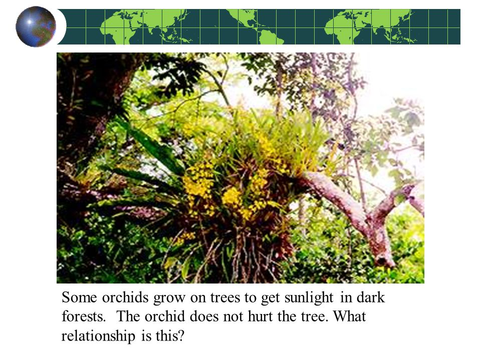 what is the relationship between an orchid and a tree