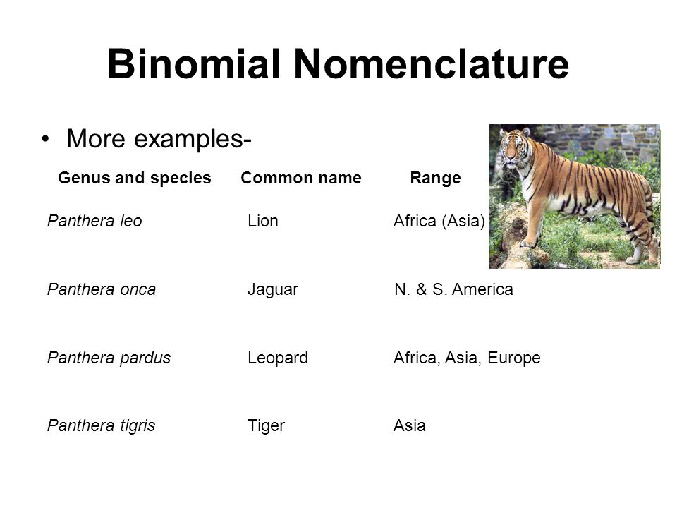 binomial nomenclature Binomial nomenclature is part of the wikiproject biology, an effort to build a comprehensive and detailed guide to biology on wikipedia leave messages on the wikiproject talk page.