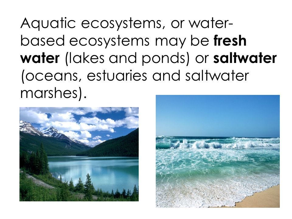 aquatic ecosystems where fresh and saltwater meet are called