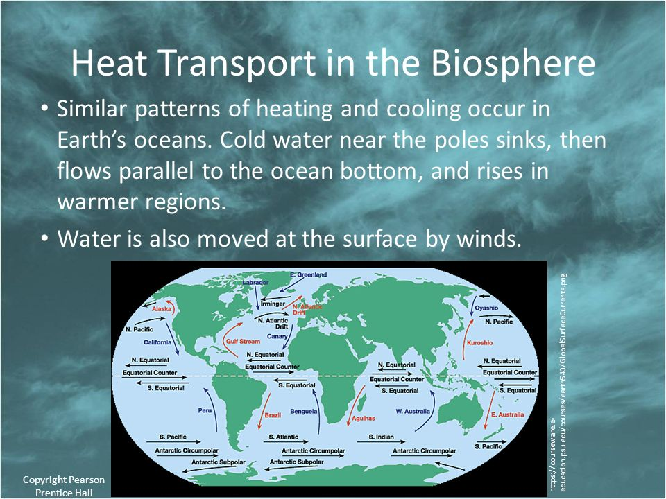 Heat Transport in the Biosphere