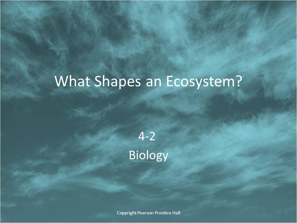 What Shapes an Ecosystem