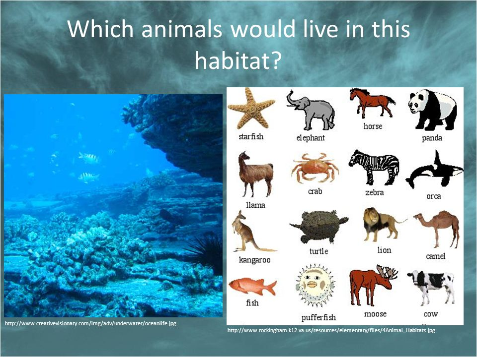 Which animals would live in this habitat