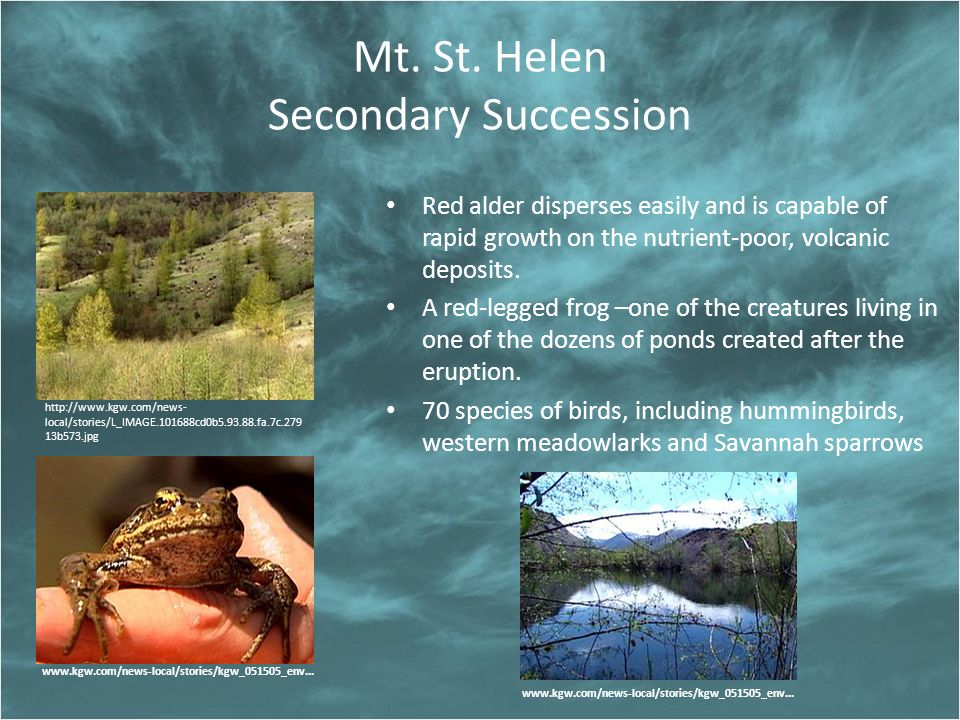 Mt. St. Helen Secondary Succession