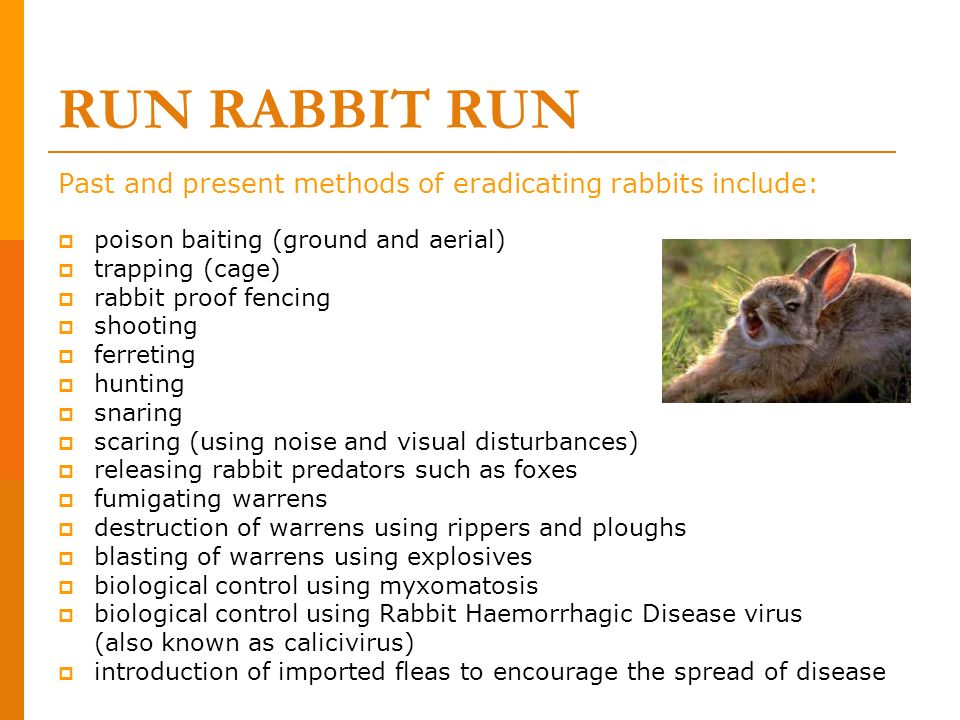 RUN RABBIT RUNPast and present methods of eradicating rabbits include: poison baiting (ground and aerial)