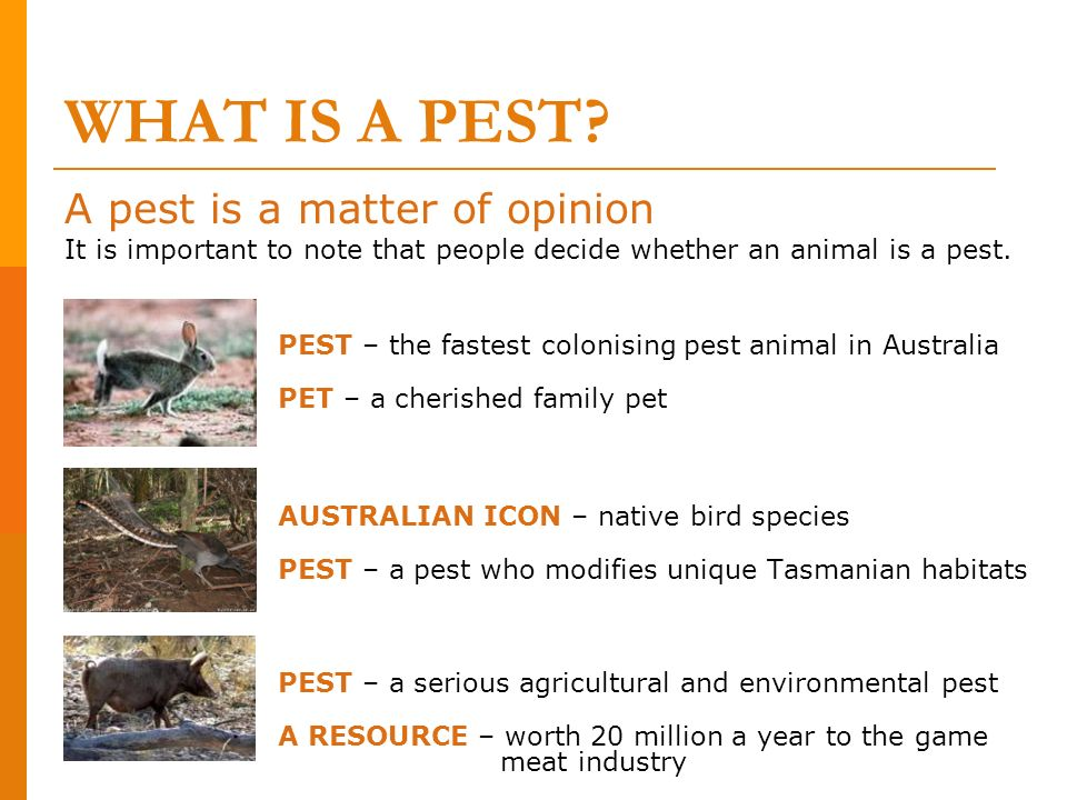WHAT IS A PEST A pest is a matter of opinion
