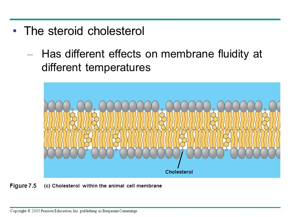 Cell Membrane Structure Cholesterol Membrane Structure and...