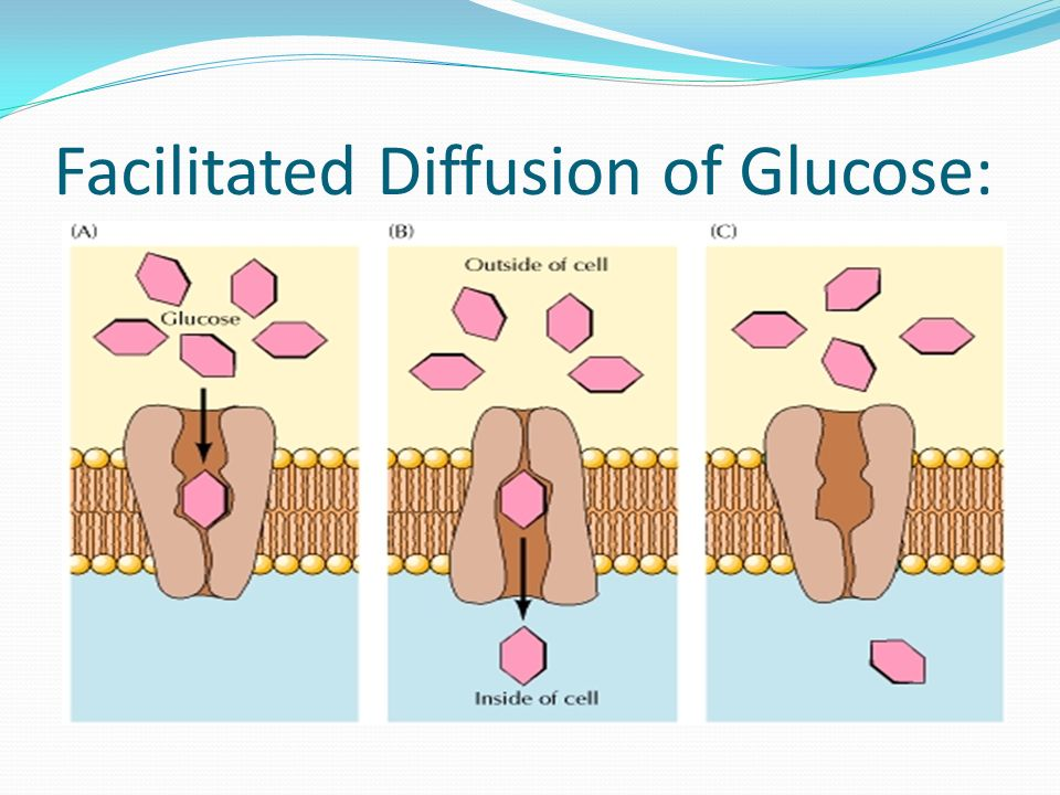 diffusion and glucose The bigger the difference between concentrations, the diffusion will be faster 2  the size of the chemical substance o2 is two atoms glucose is 24 atoms big.