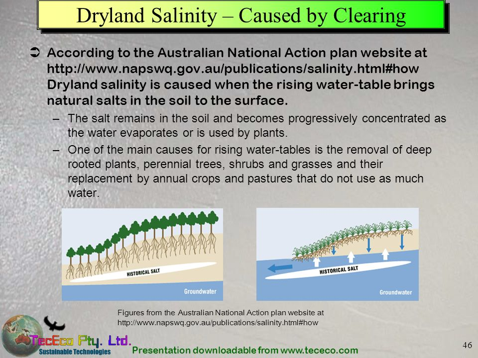 Dryland Salinity – Caused by Clearing