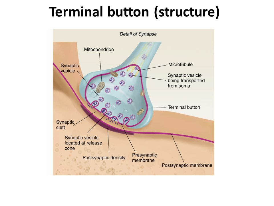 Terminal button (structure)