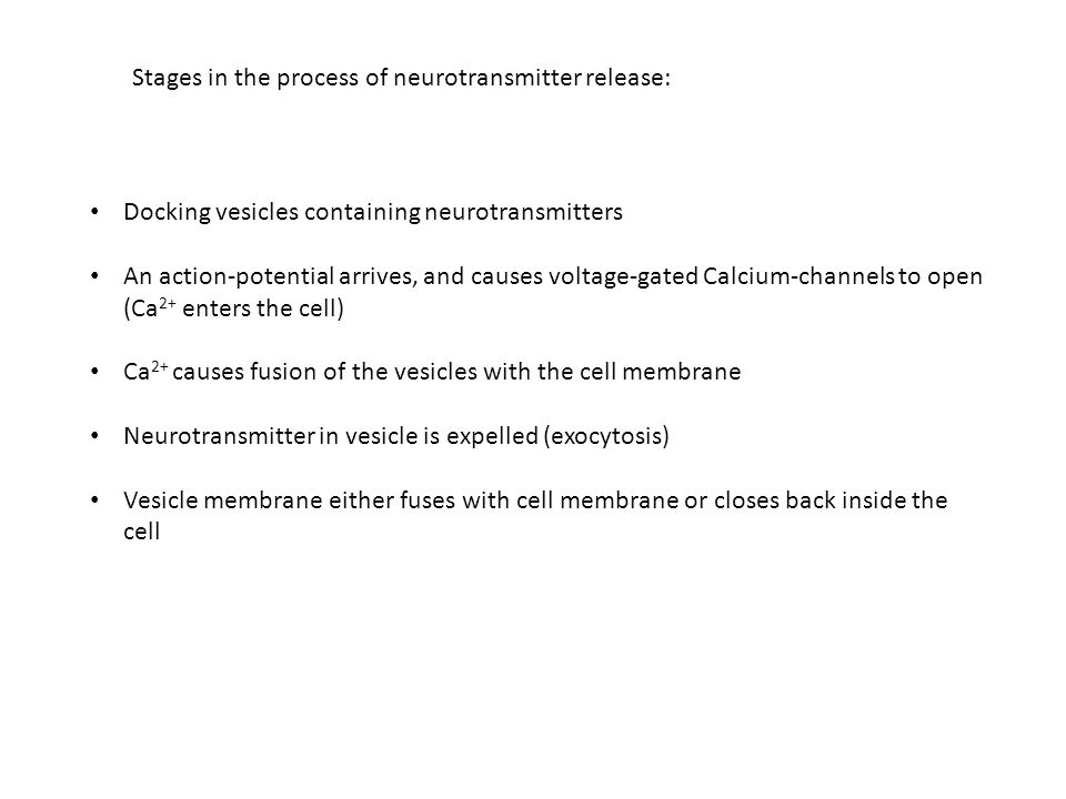 Stages in the process of neurotransmitter release: