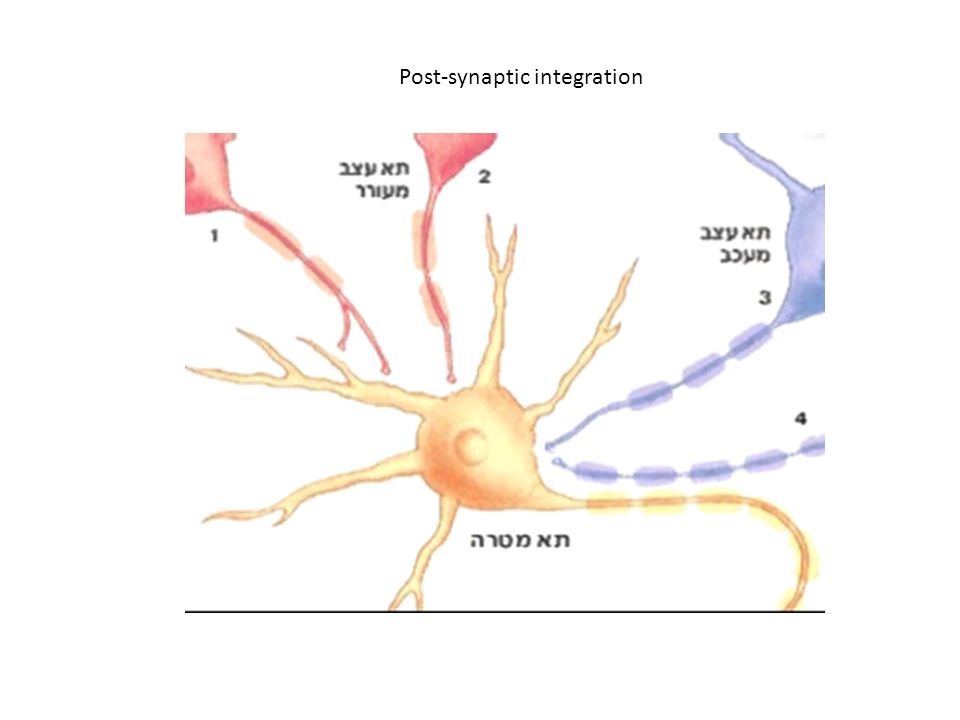 Post-synaptic integration