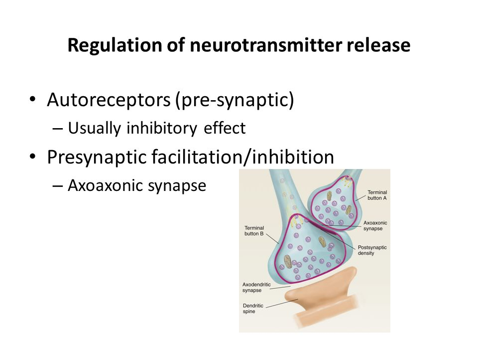 Regulation of neurotransmitter release