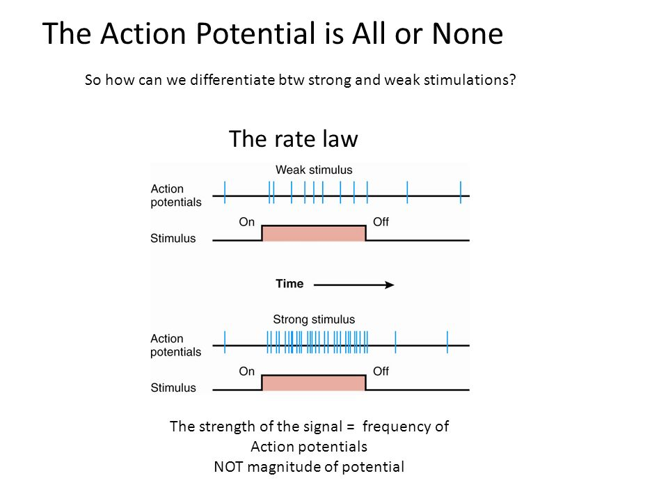 The Action Potential is All or None