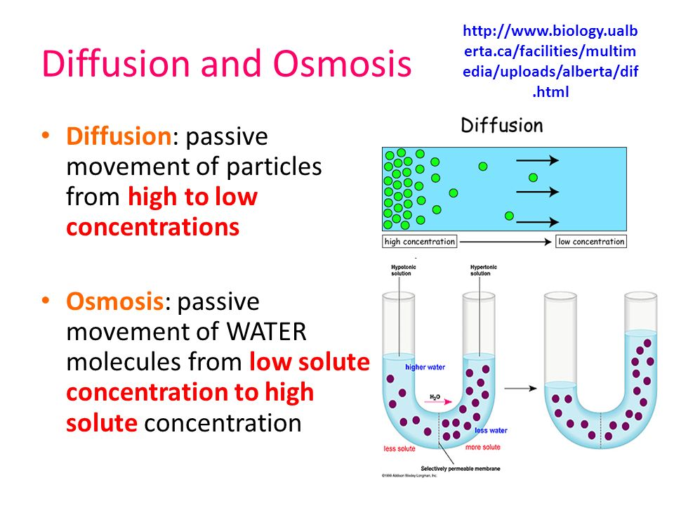 diffusion and osmosis shown in solutions essay Diffusion osmosis lab report read this essay on biology 1020 diffusion and osmosis lab report students fill dialysis tubing with a solution of glucose and.