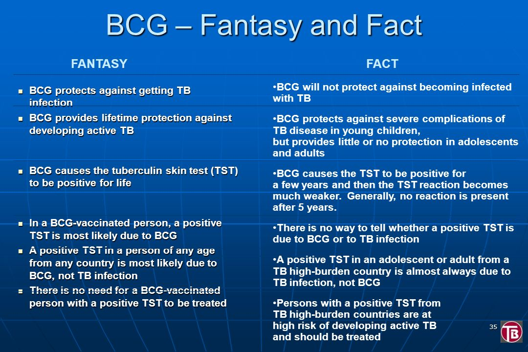 BCG – Fantasy and Fact FANTASY FACT