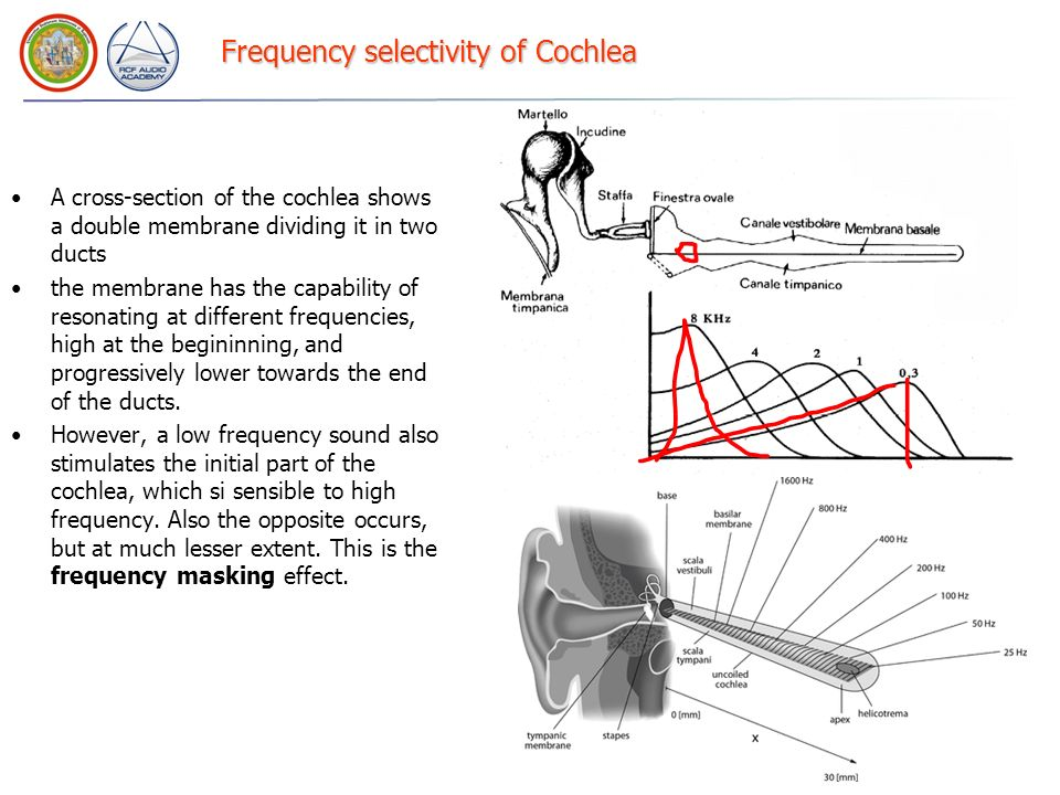 Frequency selectivity of Cochlea