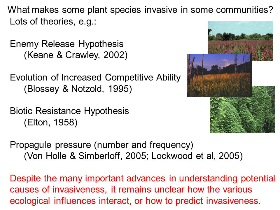 What makes some plant species invasive in some communities
