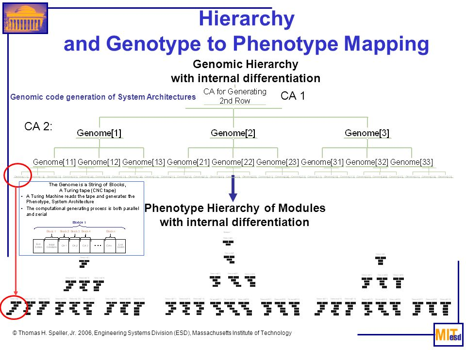 Hierarchy and Genotype to Phenotype Mapping
