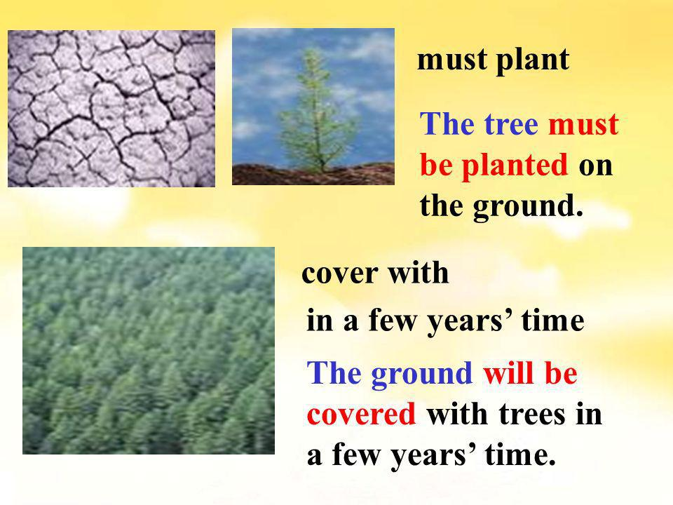 must plant The tree must be planted on the ground.