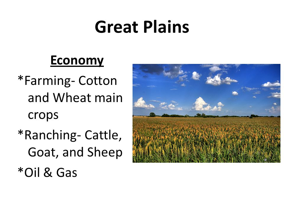 Great Plains Economy *Farming- Cotton and Wheat main crops *Ranching- Cattle, Goat, and Sheep *Oil & Gas