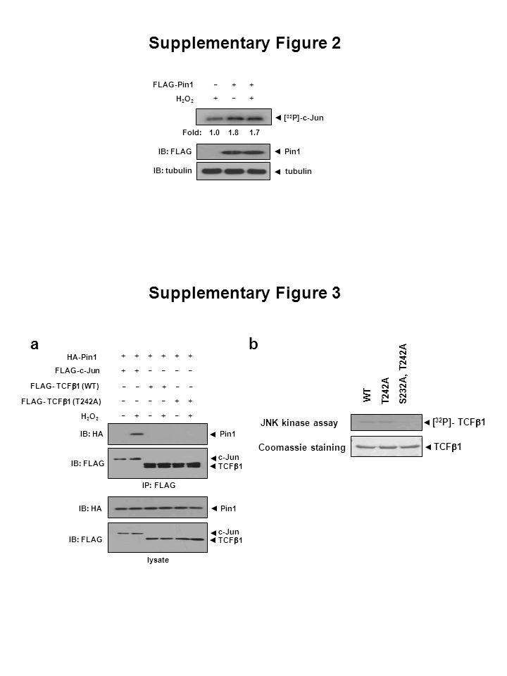 Supplementary Figure 2 Supplementary Figure 3 a b S232A, T242A T242A