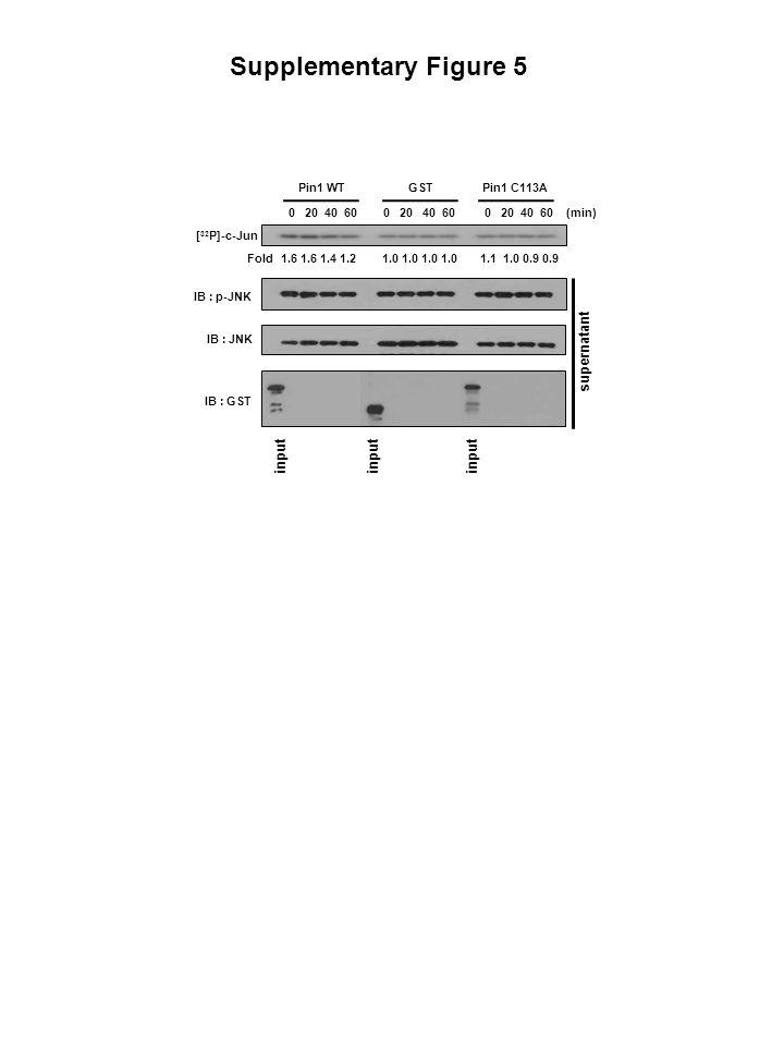 Supplementary Figure 5 supernatant input Pin1 WT Pin1 C113A GST