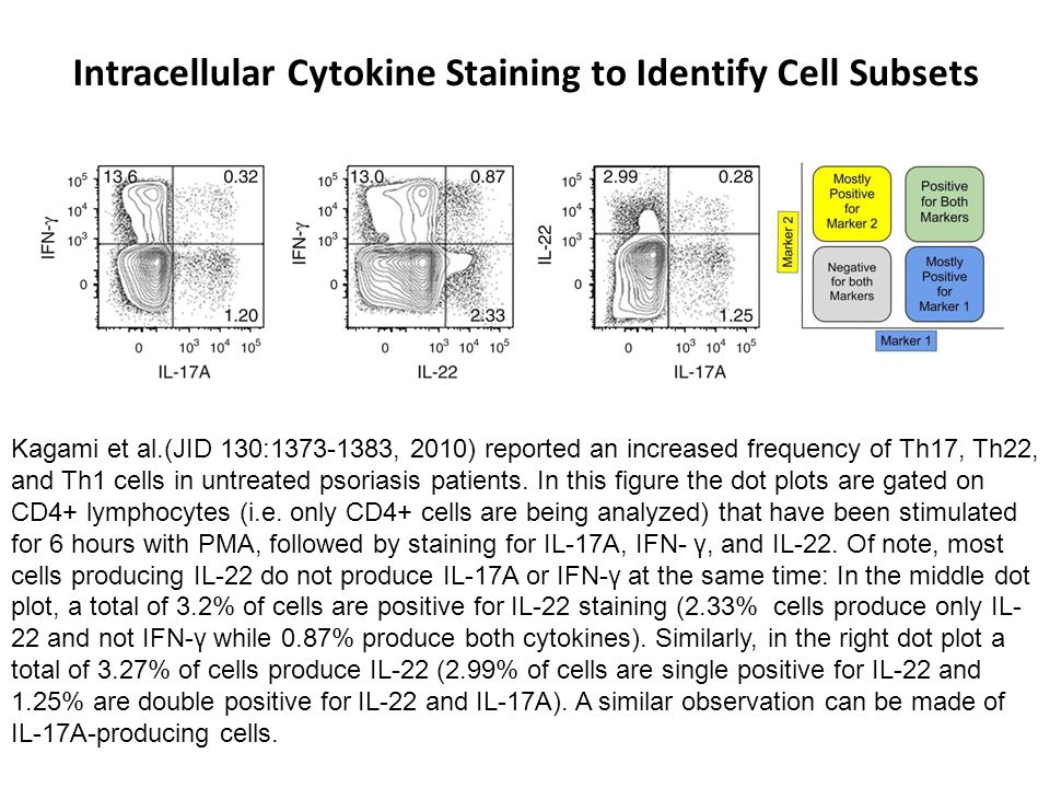 Intracellular Cytokine Staining to Identify Cell Subsets