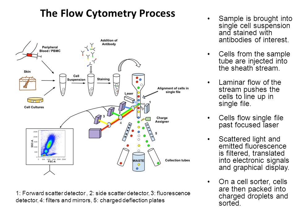The Flow Cytometry Process