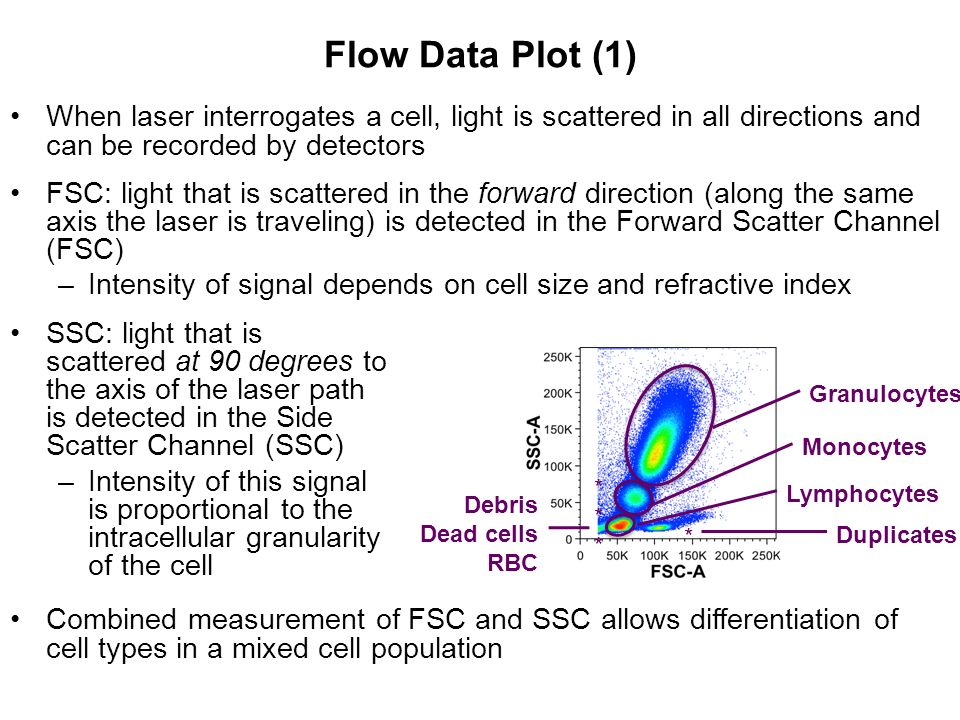 Flow Data Plot (1) When laser interrogates a cell, light is scattered in all directions and can be recorded by detectors.