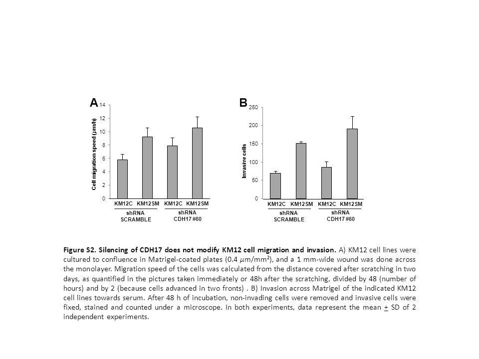 A B. Invasive cells. Cell migration speed (μm/h) KM12C. KM12SM. KM12C. KM12SM. KM12C. KM12SM.