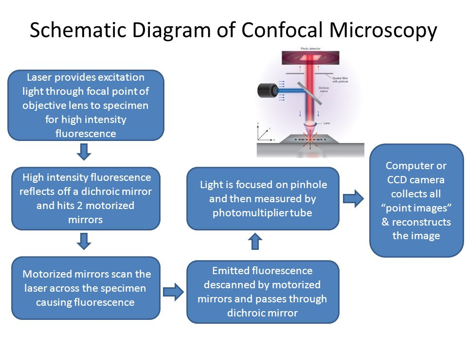 Schematic Diagram of Confocal Microscopy