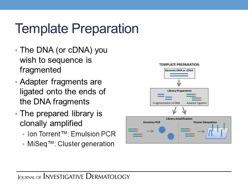 Template Preparation The DNA (or cDNA) you wish to sequence is fragmented. Adapter fragments are ligated onto the ends of the DNA fragments.