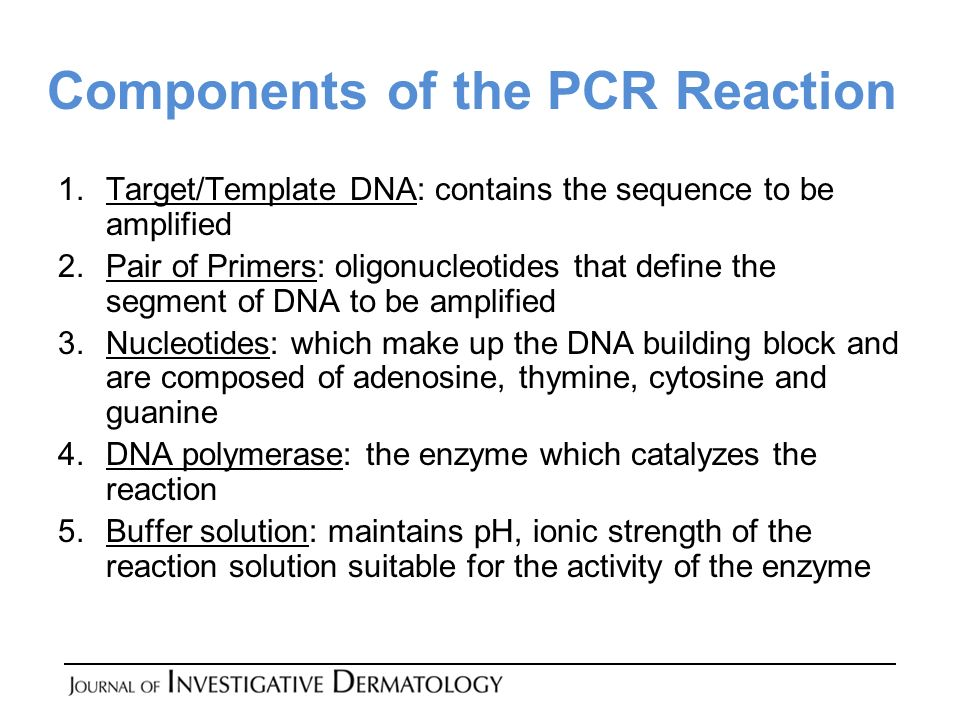 Components of the PCR Reaction