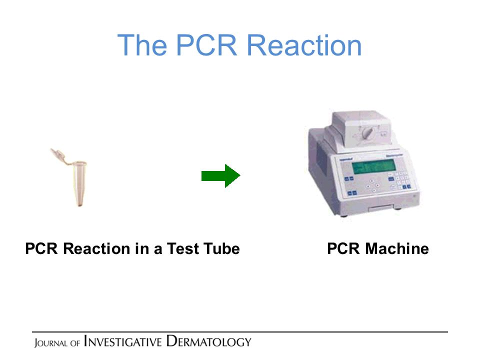 The PCR Reaction PCR Reaction in a Test Tube PCR Machine