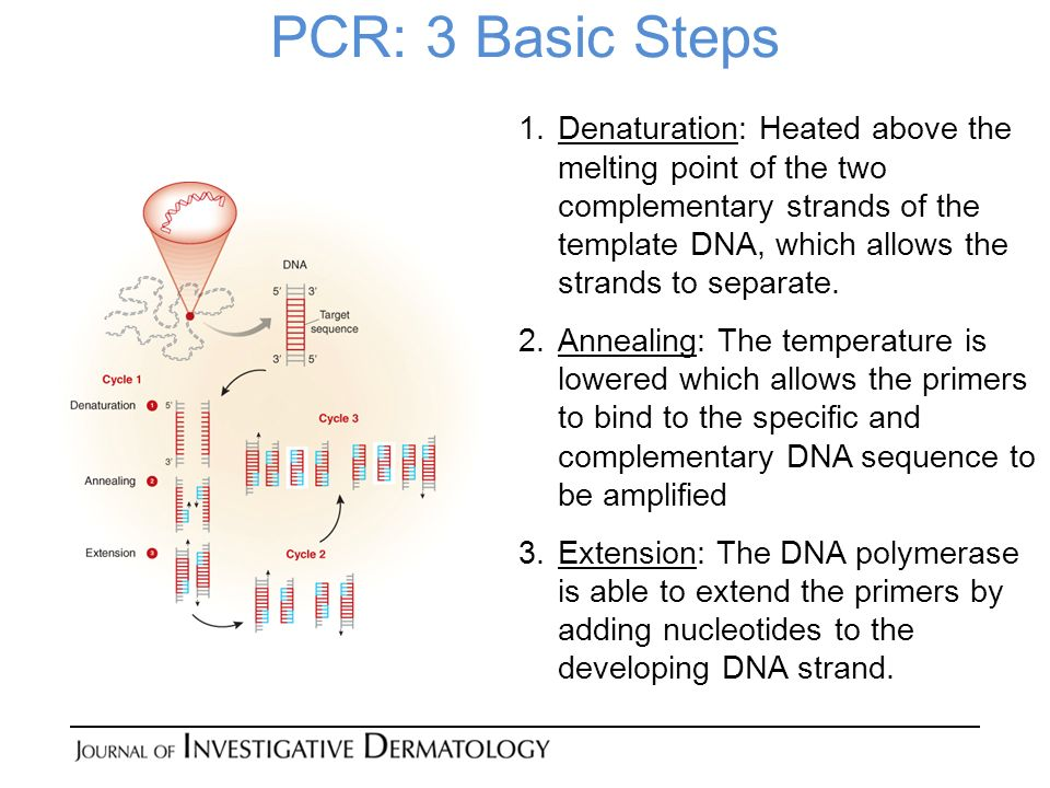 PCR: 3 Basic Steps