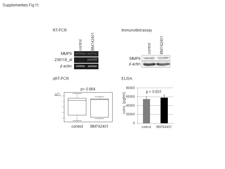 Supplementary Fig 11. RT-PCR. Immunoblot assay. BM742401. control. BM742401. control. MMP9. 236118_at.