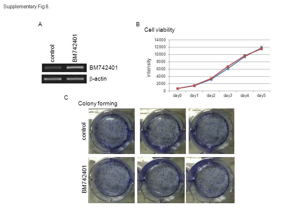 A B Cell viability BM742401 control BM742401 b-actin C Colony forming