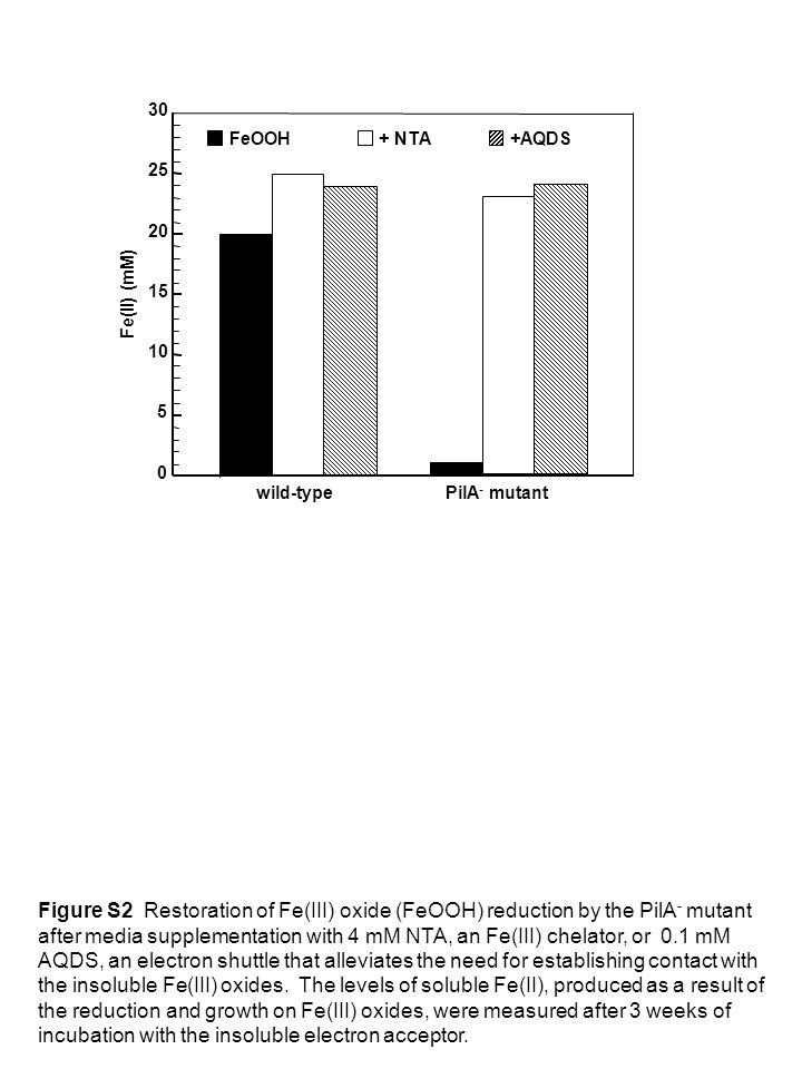 5 10. 15. 20. 25. 30. Fe(II) (mM) wild-type. PilA- mutant. FeOOH. + NTA. +AQDS.