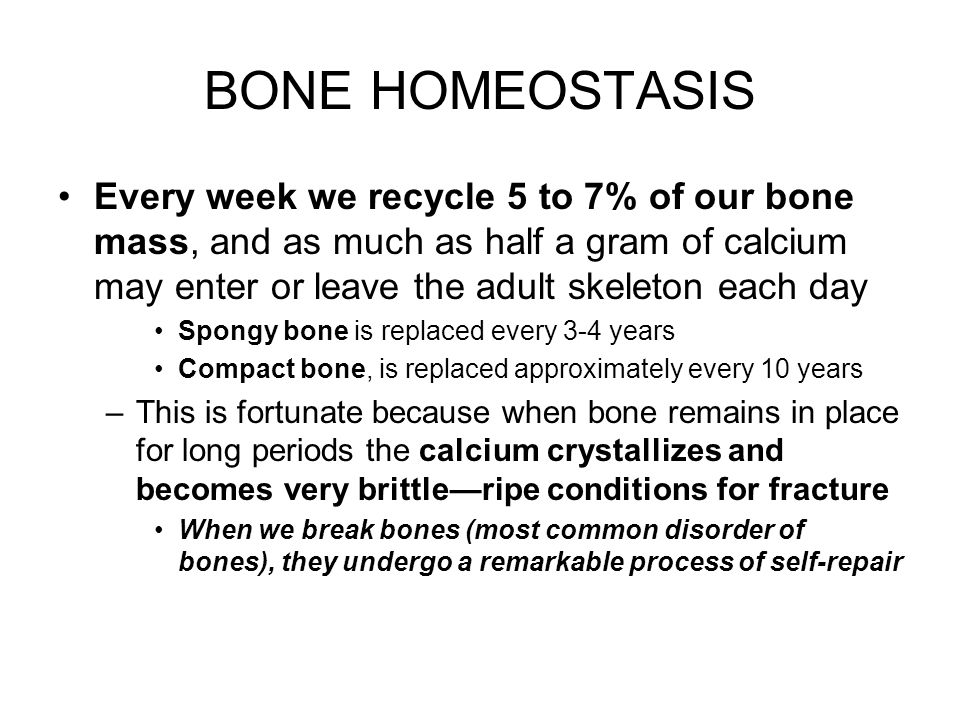 BONE HOMEOSTASIS Every week we recycle 5 to 7% of our bone mass, and as much as half a gram of calcium may enter or leave the adult skeleton each day.