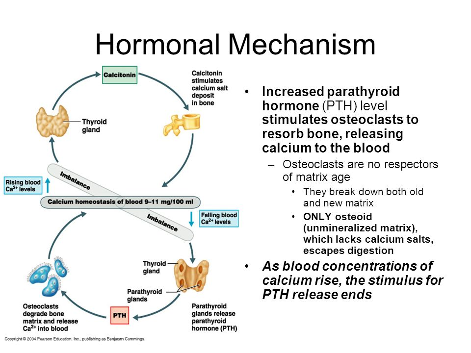 Hormonal Mechanism Increased parathyroid hormone (PTH) level stimulates osteoclasts to resorb bone, releasing calcium to the blood.