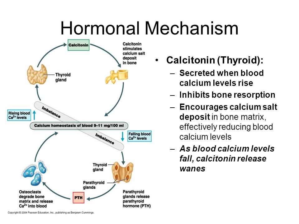 Hormonal Mechanism Calcitonin (Thyroid):